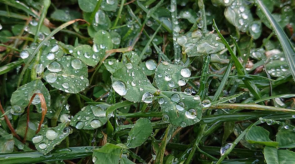 Wassertropfen im Gras
