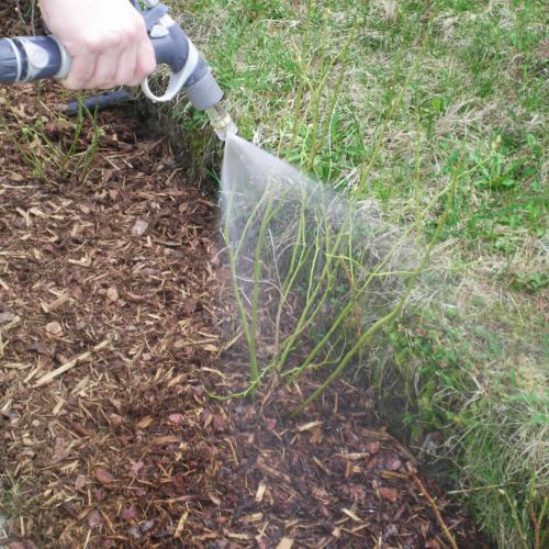 Gartensegen Pflanzenwachstum